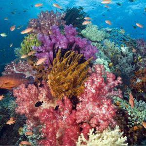 Photo of Coral Design