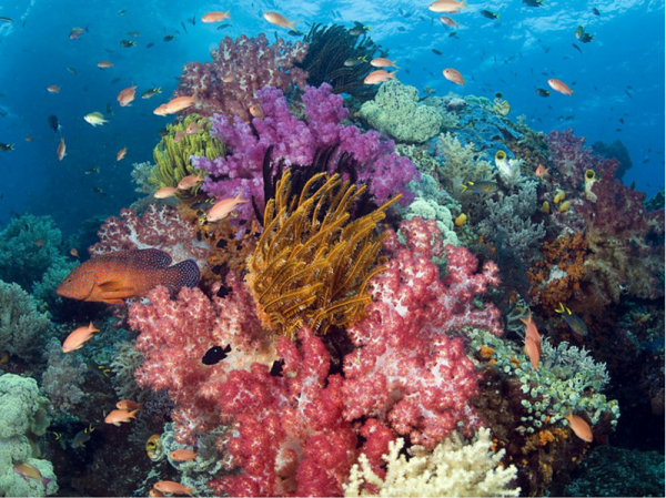 Photo of Coral Design
