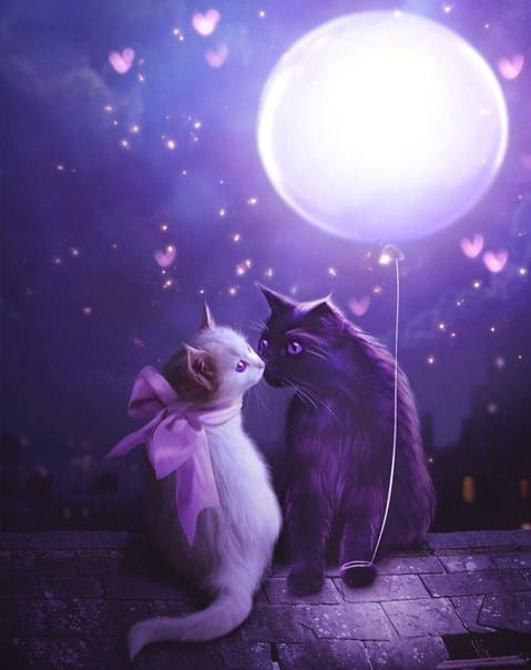 Photo of Moonlight Cats Design