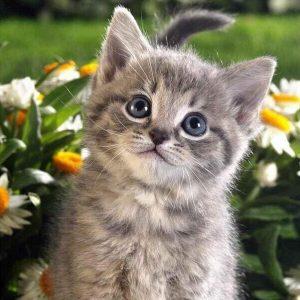 Photo of Daisy Kitty Design