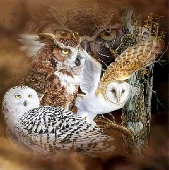 Photo of Owl Design