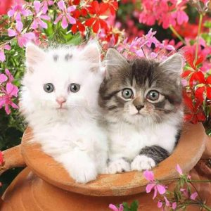 Photo of Cats in a Pot Design