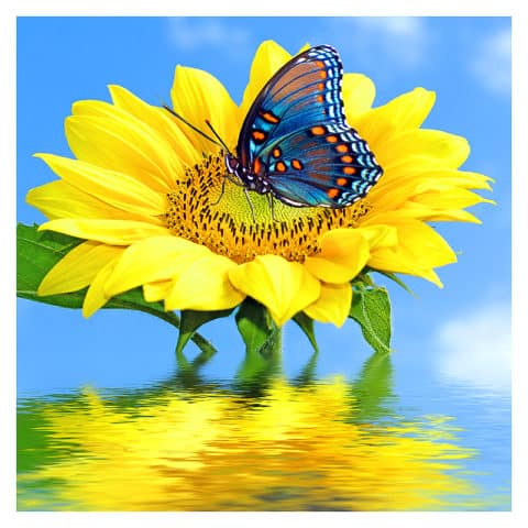 Photo of Sunflower Butterfly Design