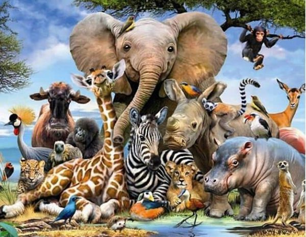 Photo of African Animals Design