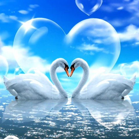Photo of Love Swans Design