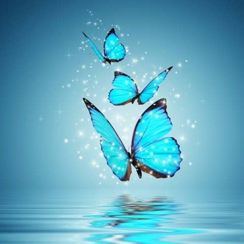 Photo of Blue Butterflies Design