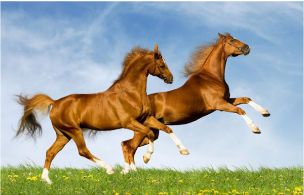 Photo of Jumping Horses Design