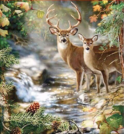 Photo of Deer River Design