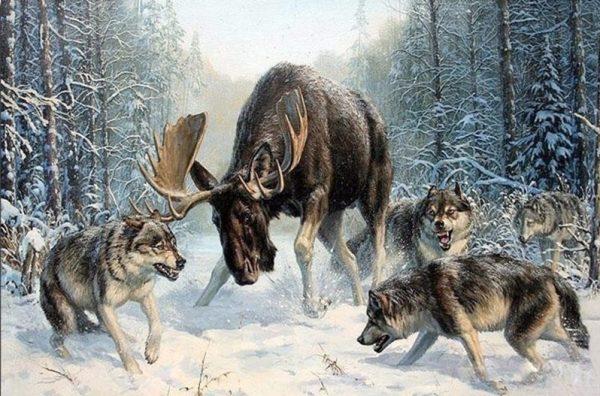Photo of Moose Battle Design