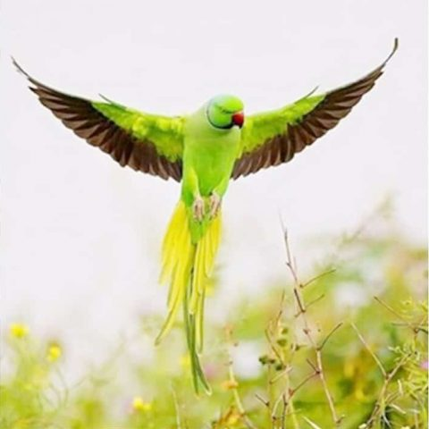 Photo of Green Parrot Design