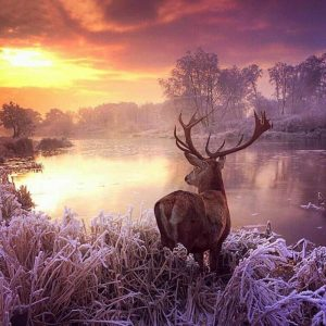 Photo of Buck Sunset Diamond Painting Design