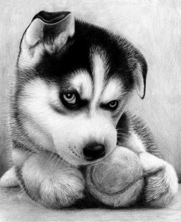 Photo of Puppy Design