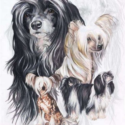 Photo of Puppies Diamond Painting Design