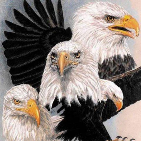 Photo of Eagle Design