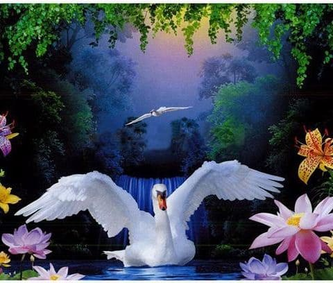 Photo of Swan in a Lake Design