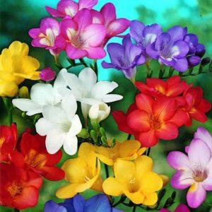 Photo of Flower Garden Design