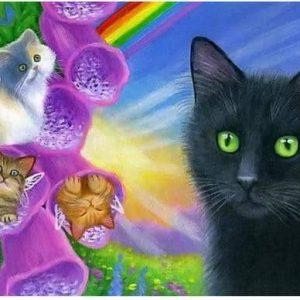 Photo of Cat Rainbows Design