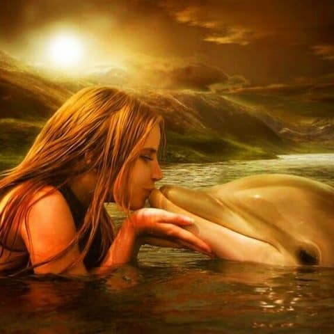 Photo of Dolphin Kiss Design