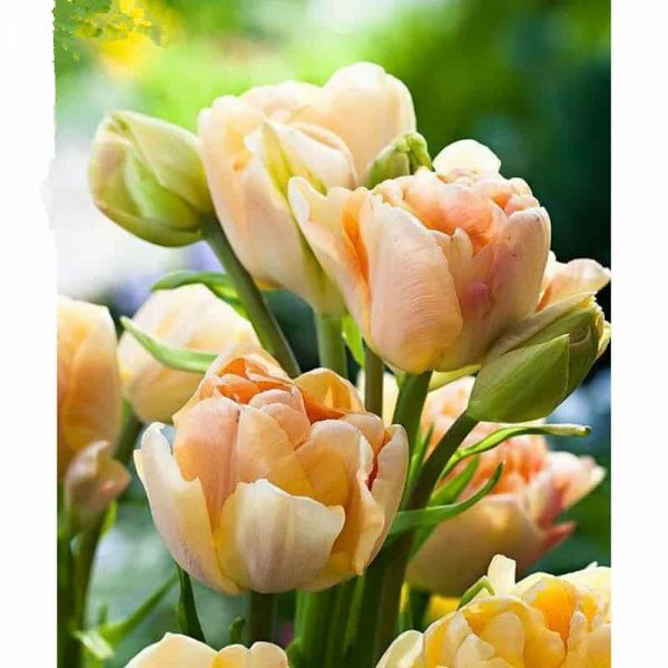 Photo of Orange Flowers Diamond Painting Design