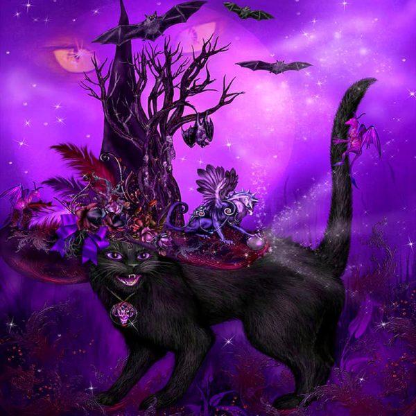 Photo of Black Cat Design