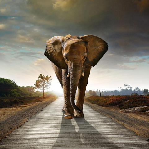 Photo of Elephant Path Diamond Painting Design