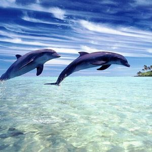 Photo of Jumping Dolphins Diamond Painting Design
