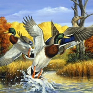Photo of Duck Lake Diamond Painting Design