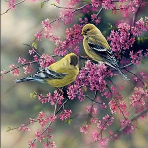 Photo of Bird Couple Diamond Painting Design