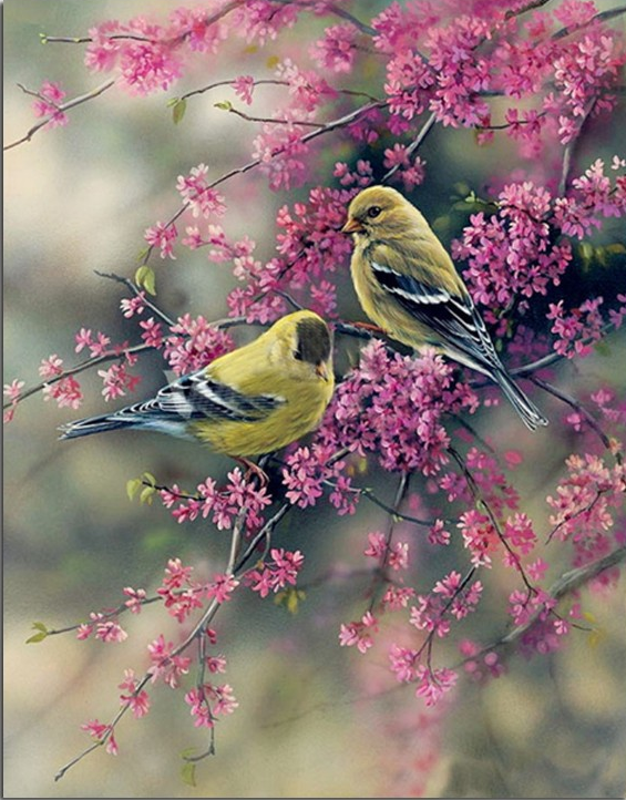 Photo of Bird Couple Diamond Painting Design