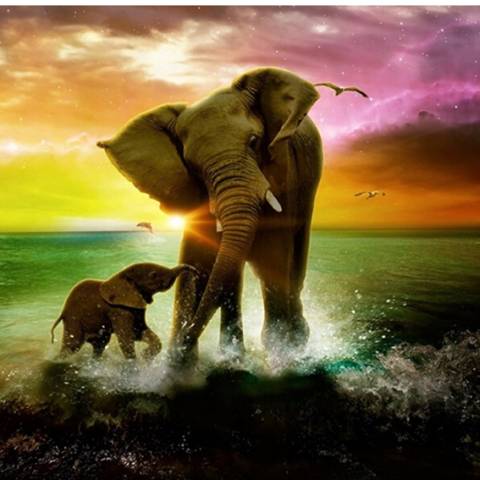 Photo of Elephant Beach Diamond Painting Design