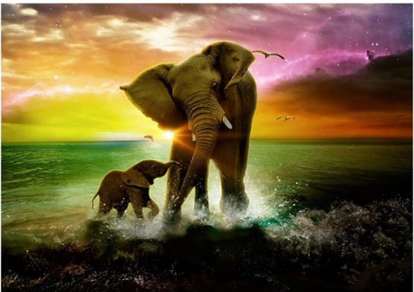 Photo of Elephant Beach Diamond Painting Design