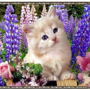 Photo of Lavender Kitten Diamond Painting Design