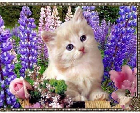 Photo of Lavender Kitten Diamond Painting Design