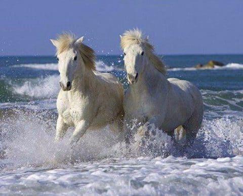 Photo of White Horse Beach Diamond Painting Design