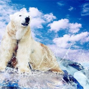 Photo of Polar Bear Diamond Painting Design