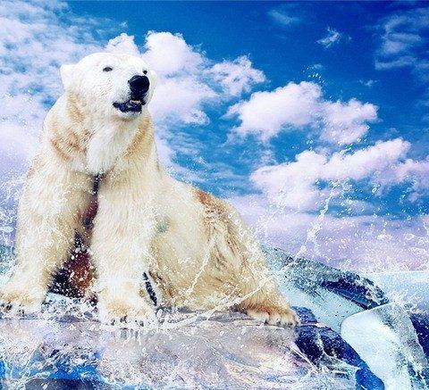 Photo of Polar Bear Diamond Painting Design