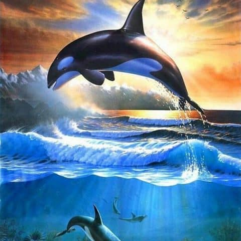 Photo of Killer Whale Diamond Painting Design