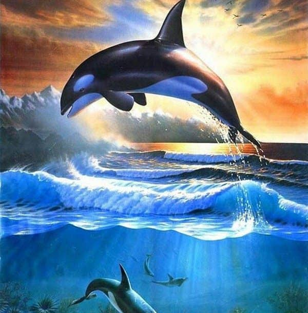 Photo of Killer Whale Diamond Painting Design