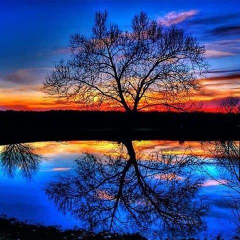 Photo of Tree Lake Diamond Painting Design