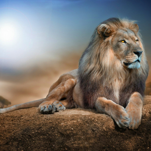 Photo of Crouching Lion Diamond Painting Design