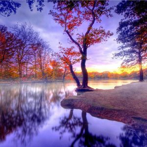Photo of Autumn Woods Reflection Diamond Painting Design