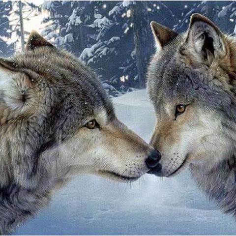 Photo of Wolf Kiss Diamond Painting Design