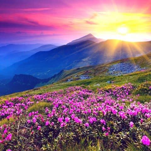 Photo of Purple Flowers Diamond Painting Design