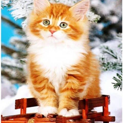 Photo of Winter Cat Diamond Painting Design