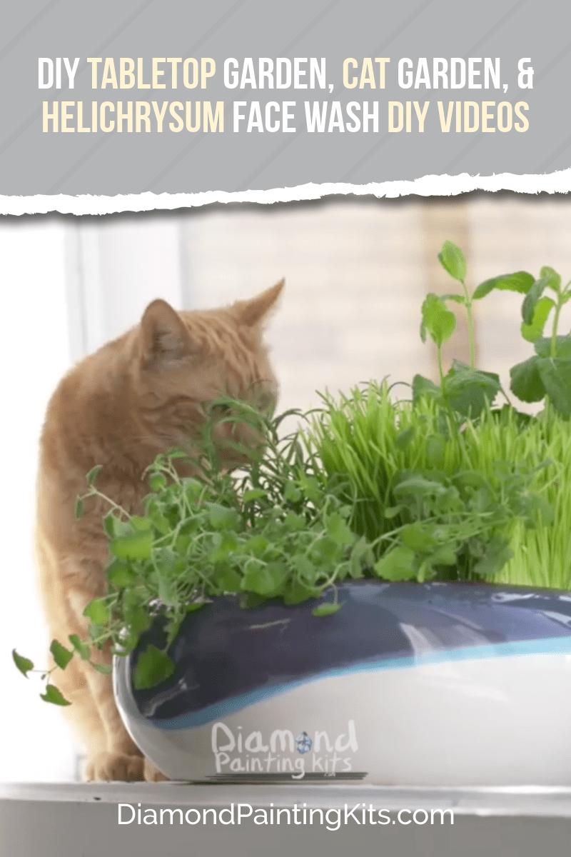 Daily Viral DIY Videos: DIY Tabletop Garden, Cat Garden, & Helichrysum Face Wash