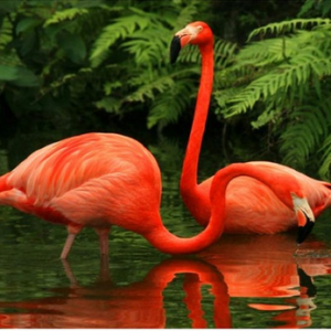 Photo of Flamingo Water Diamond Painting Kit Design