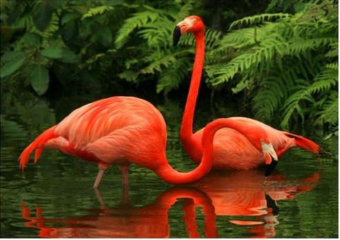 Photo of Flamingo Water Diamond Painting Kit Design